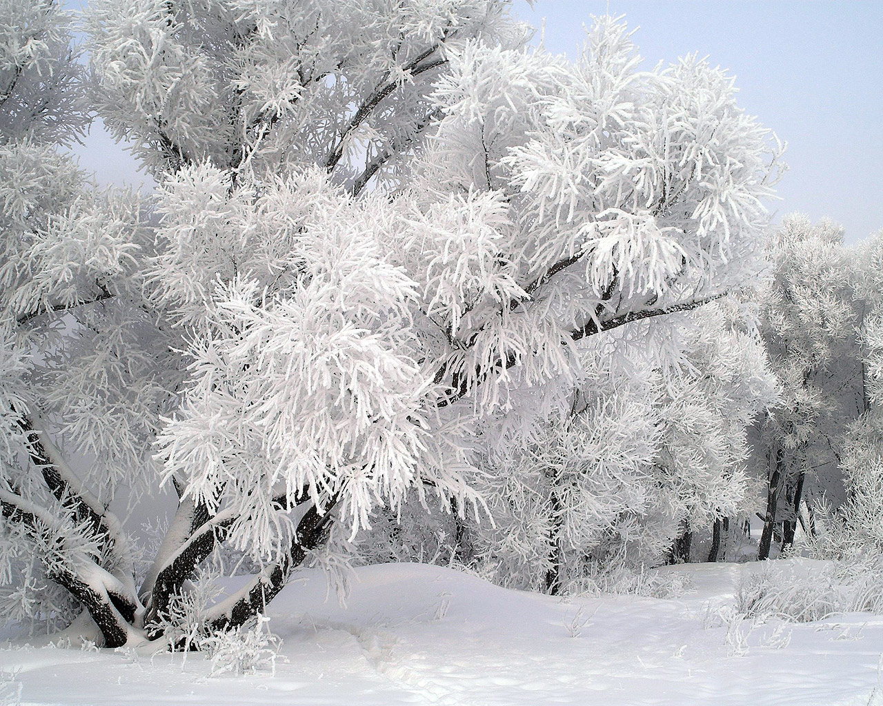 Блогът на Ати! :: Малка снежинка, на миглите ми кацна ... Pictures Trees In Winter Pinterest